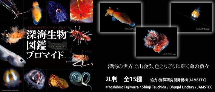 深海生物図鑑ブロマイド